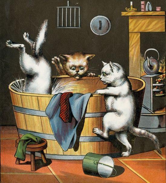 Gatos bañandose
