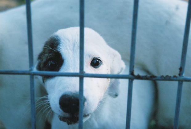 cómo adoptar perros