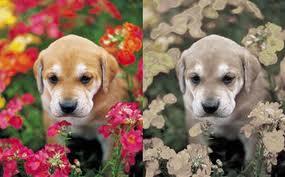 cómo ven los perros - comparación