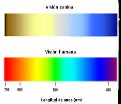 cómo ven los perros - espectro de colores