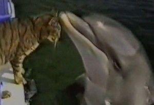 gato y delfín