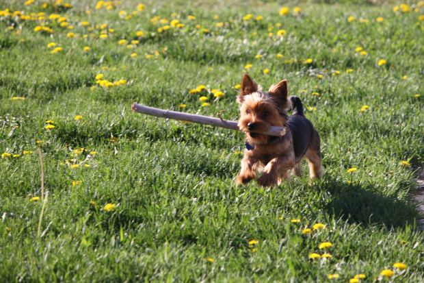 perro cachorro jugando