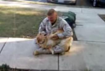 reencuentro de perro con soldado
