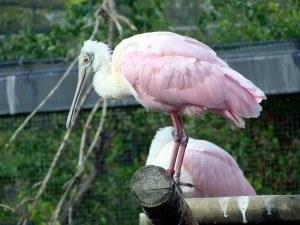 Legislación y protección de aves
