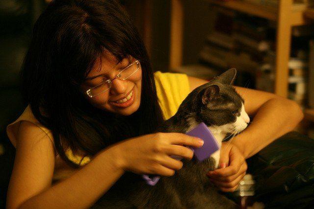 dueña cepillando a su gato
