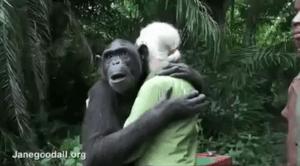 chimpancé abraza a su liberadora