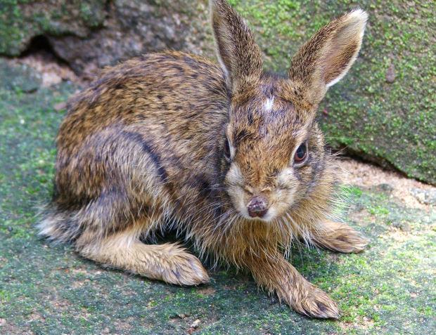 Son roedores los conejos? Un detallado análisis – www.animaltia.es