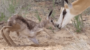 animales dando primeros pasos