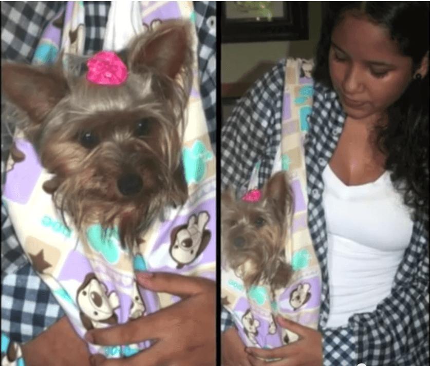 DIY bolso para llevar a tu perrito