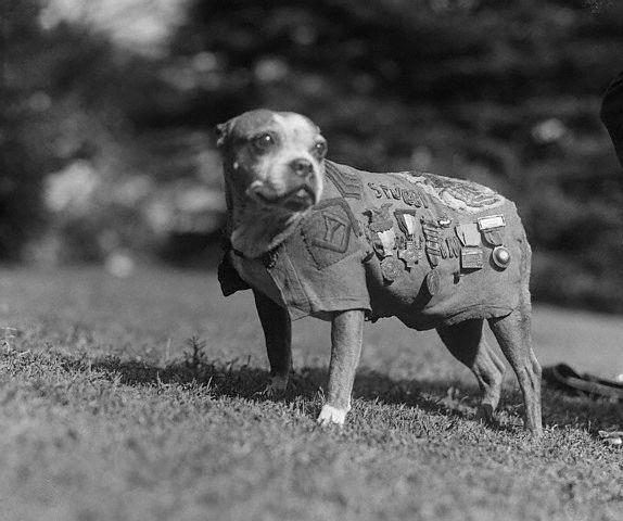 Sargento Stubby con medallas