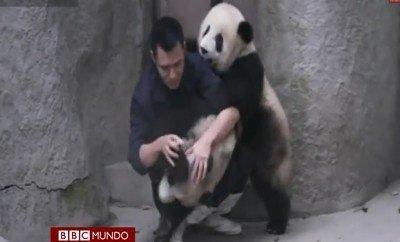 pandas no toman medicina