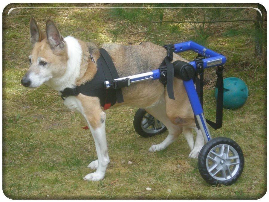 Las mejores sillas de ruedas para perros - Ruedas para sillas de ruedas ...